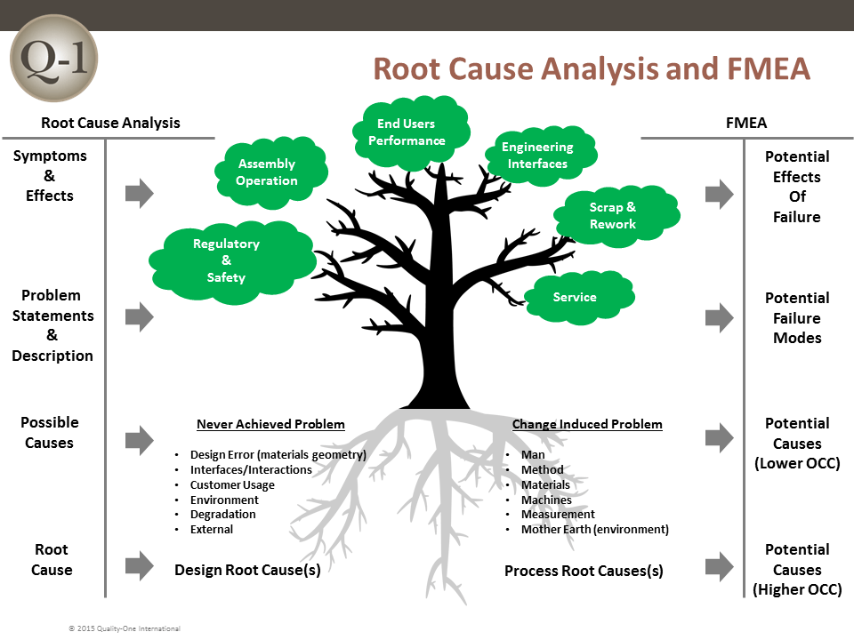 root structure benefits
